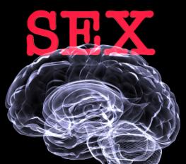sexbrain